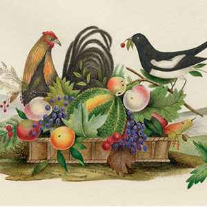 Detail from Isabel Kerrich's manuscript of The Peacock at Home, 1875-1876
